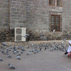burung burung dan burung1