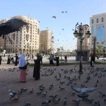 burung burung dan burung2
