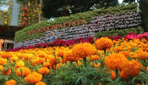 nong nooch garden 13